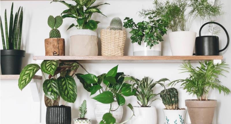 4 Hard to Kill Indoor House Plants